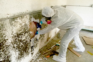 Negative Air Mold Remediation